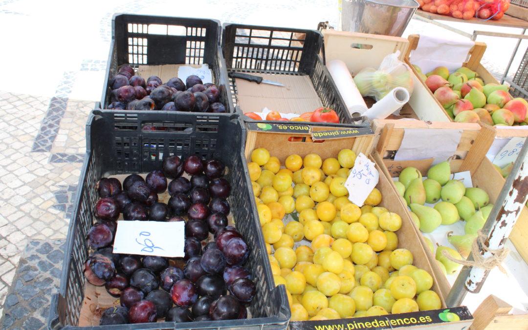 Olívia Vinhas