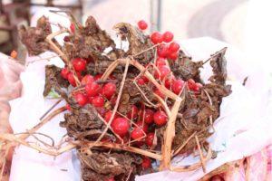 uva de cão praça da fruta2